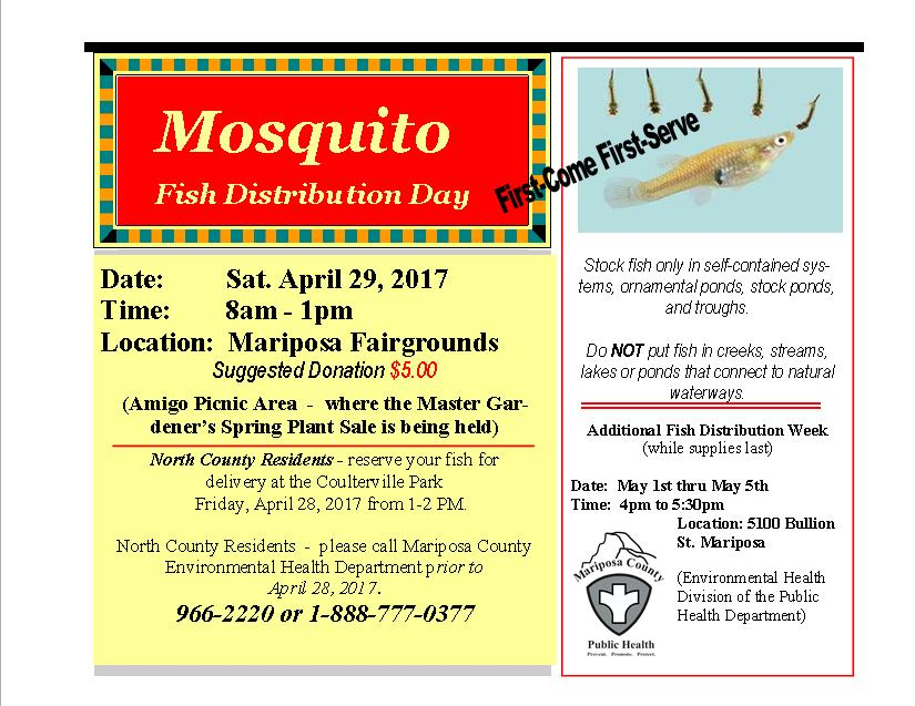 Mosquito Ad Flyer